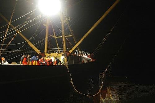 Fisheries - source EU