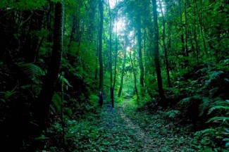 Forest - source FAO