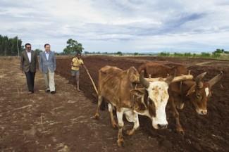 Ethiopia agriculture - source UN Eskinder Debebe