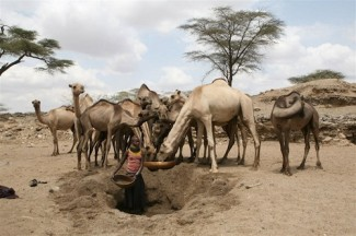 Water and food security - FAO