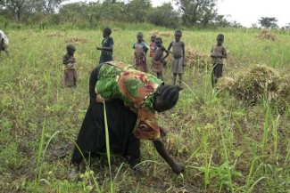Farming South Sudan - FAO