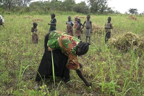 Farming South Sudan - FAO
