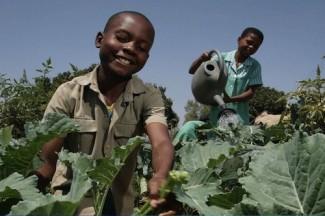 Children Zimbabwe- UNICEF