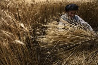 Crops - FAO