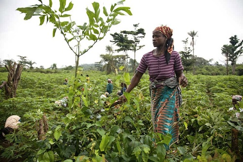 Woman Liberia - UNML
