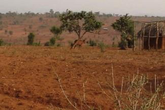 Burundi coffee plantation abandoned - IRIN